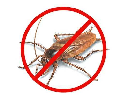 cockroach-pest-control-service-trichy