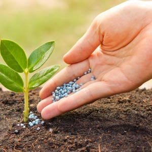 Best fertilizer suppliers theni