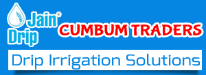 Drip Irrigation Cumbum Tissue Culture Planting