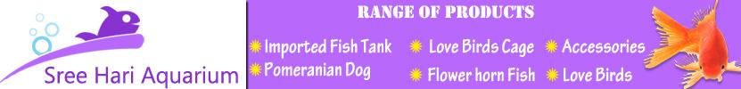 Professional-Aquarium-Maker-for-resident-Office-Theni