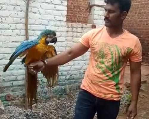 Hen-Birds-Shop-Cumbum