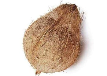 Semi Husked Coconuts Suppliers From